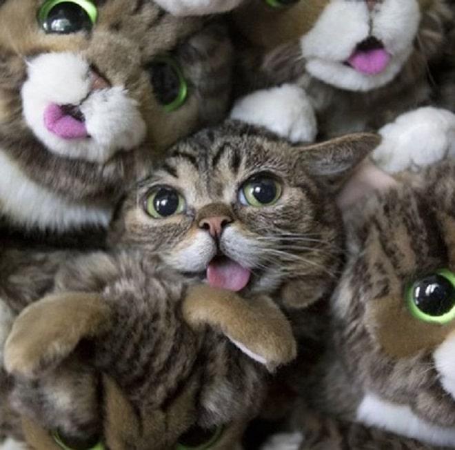 Кошка лежит среди игрушек