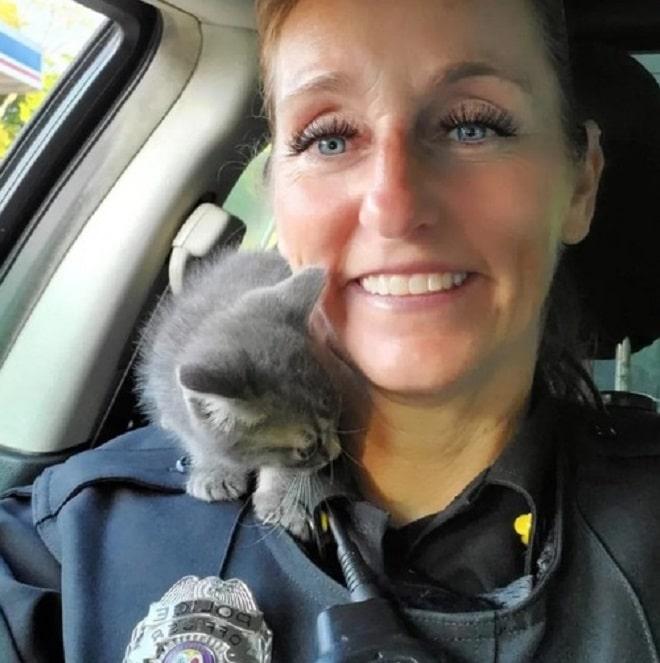 Котенок и полиция