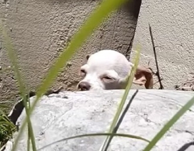 Собака спит
