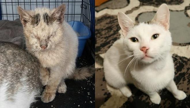Бездомная и ухоженная кошка
