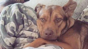 Nala, the dog
