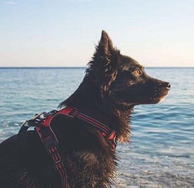 Пес на море
