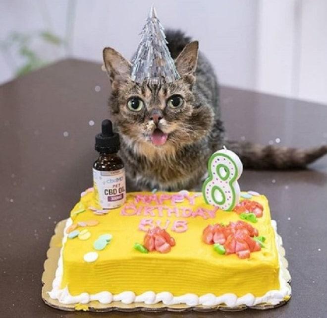 Кошка с тортом