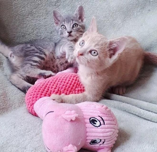 Котята и игрушки