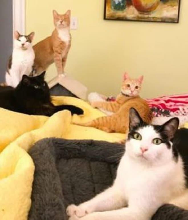 Пять котов