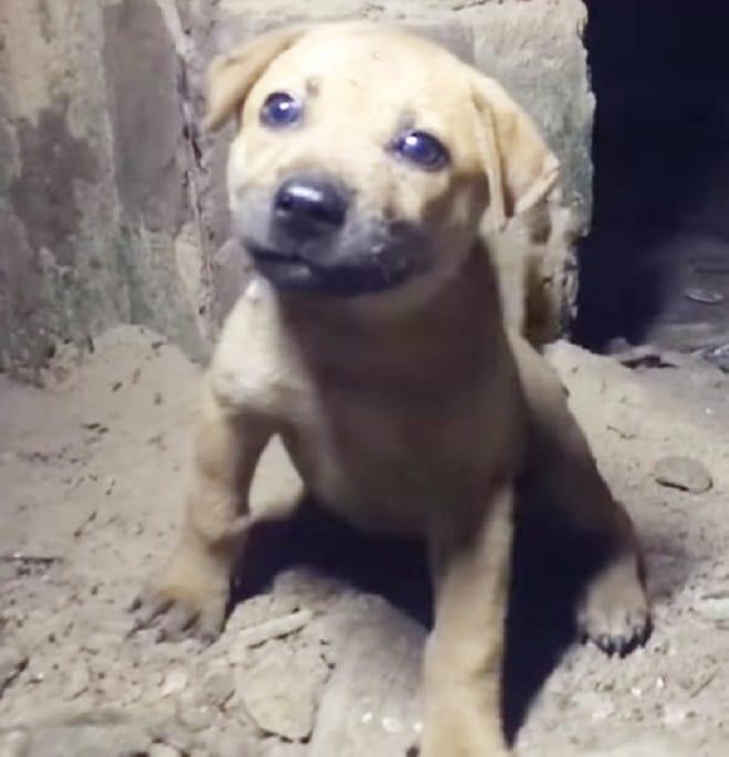 Привязанный щенок