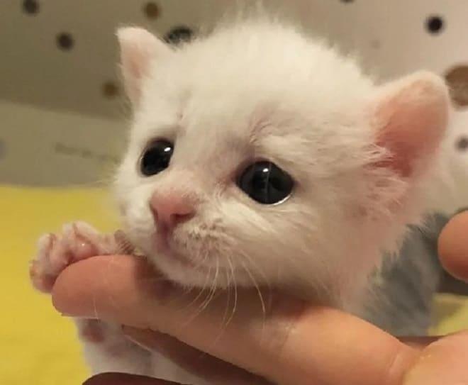 Котенок и палец