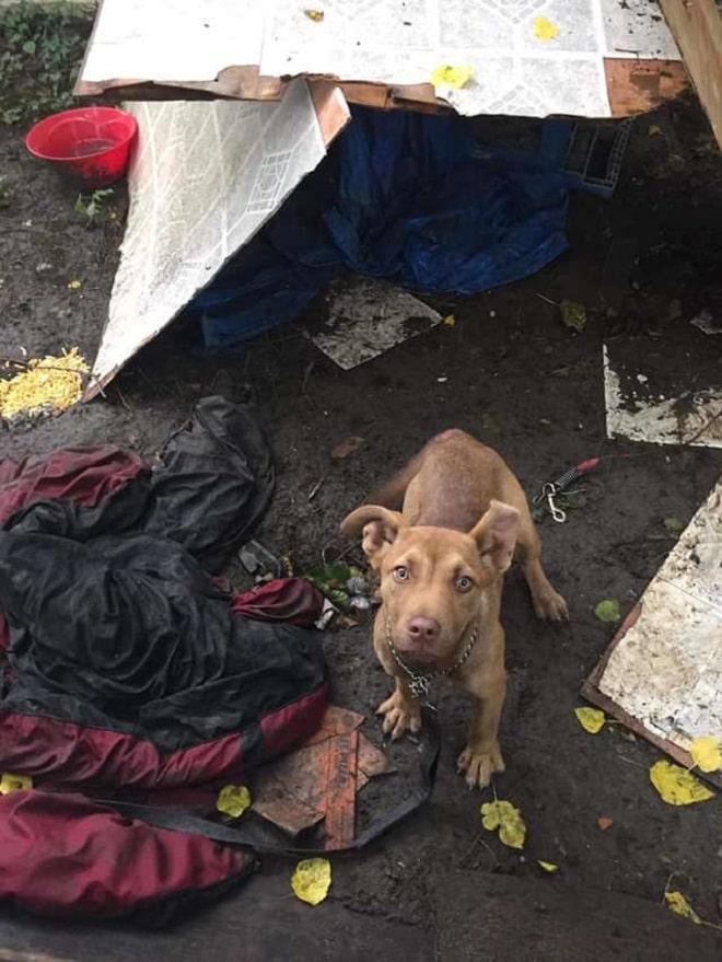 Собака на мусорном дворе