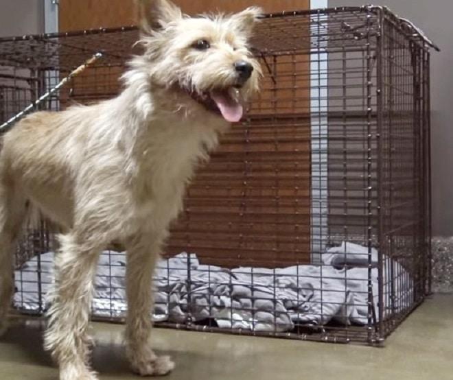 Собака возле клетки