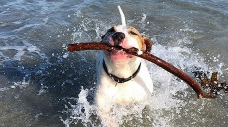 dog and stick