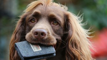 dog and wallet