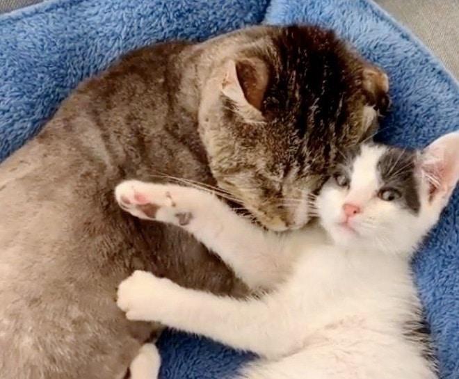 Кот с котенком