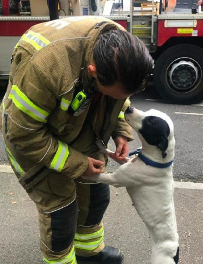 Собака и пожарник