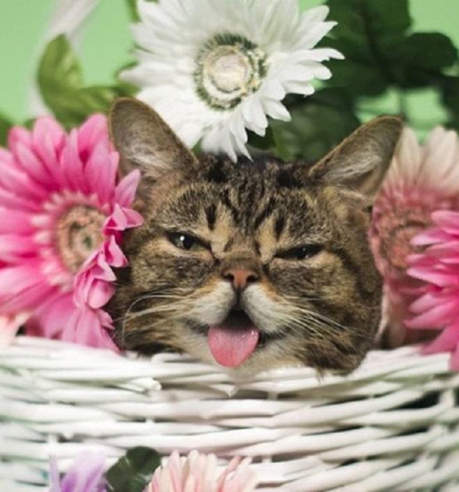 Кошечка среди цветов