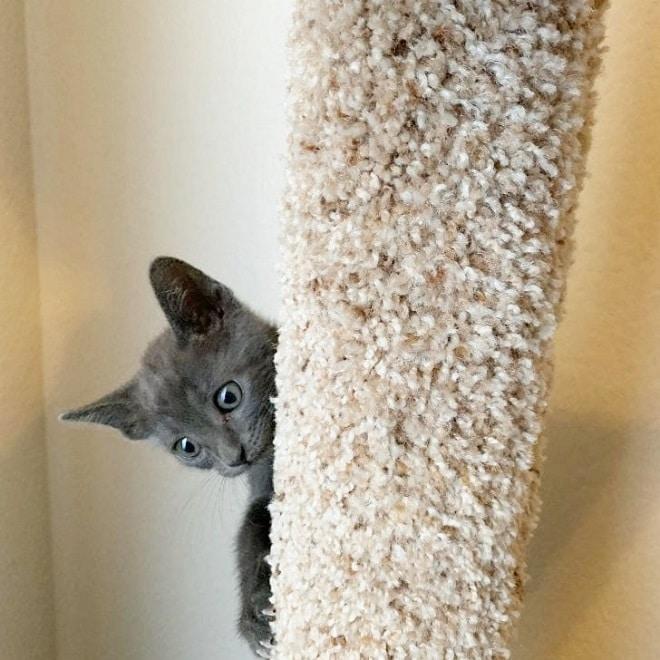 Котенок с большими глазами