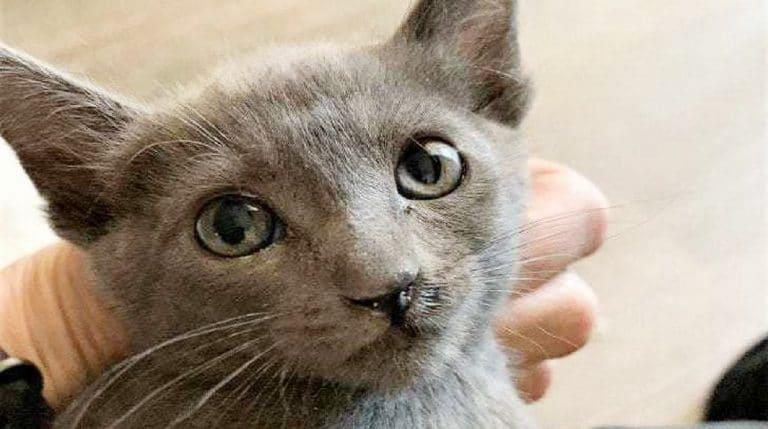 grey sweetie
