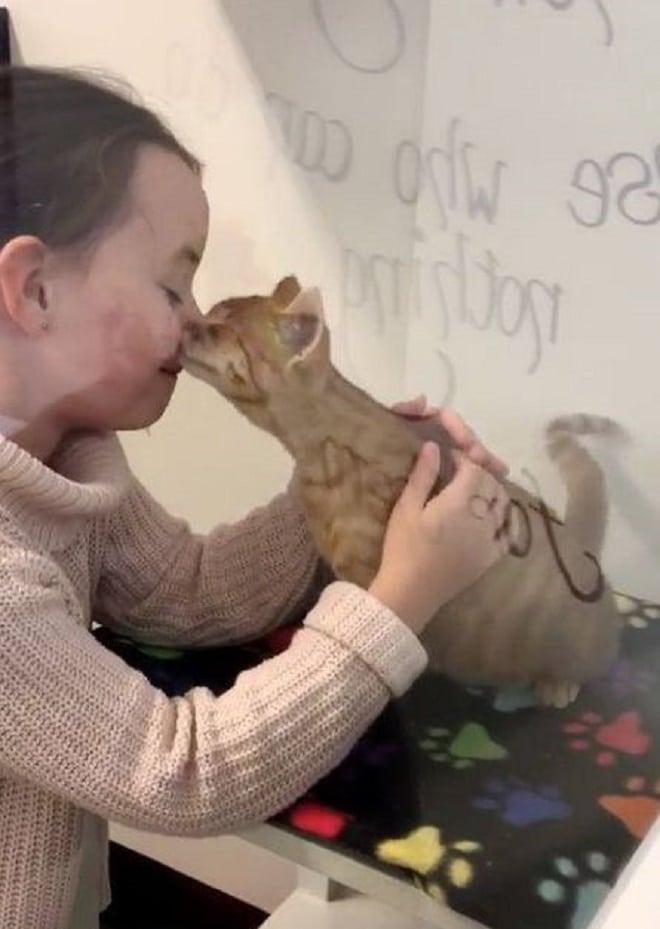 Котенок целует девочку