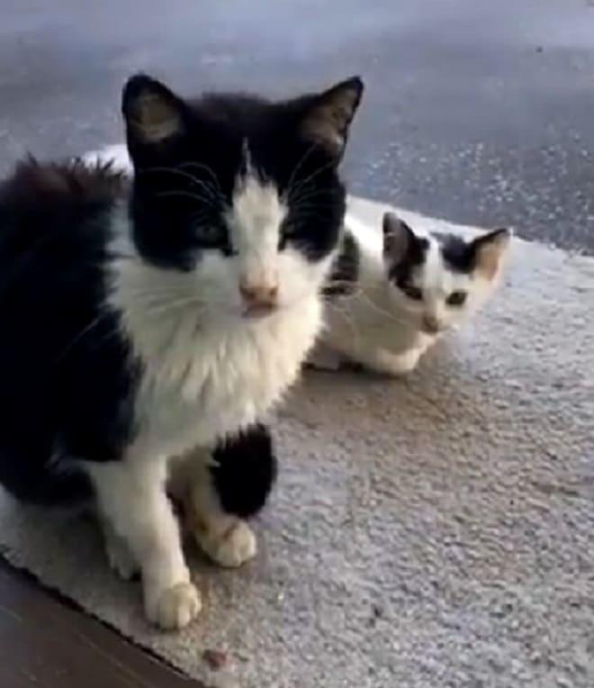 Кошка и малыш