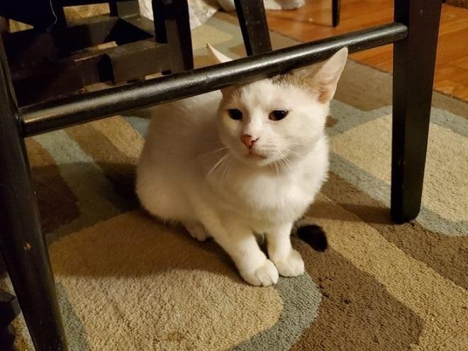 Кот под стулом