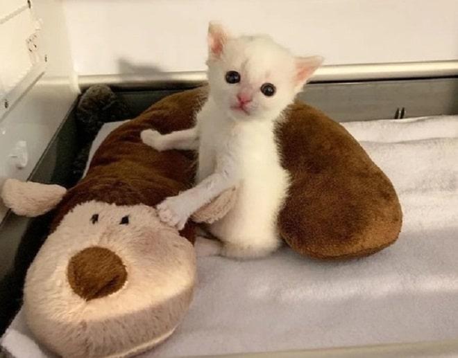 Котенок с подушкой