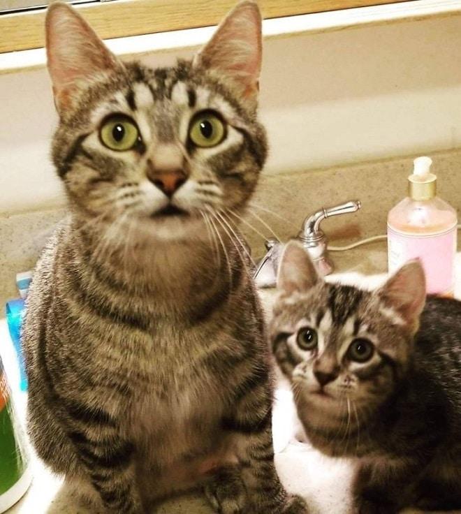 Котенок с мамой