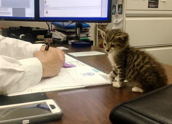 Котенок на столе