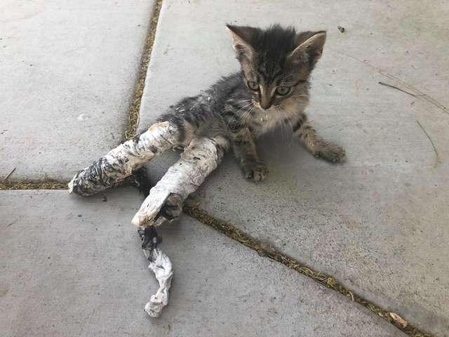 Котенок с перевязанными лапками