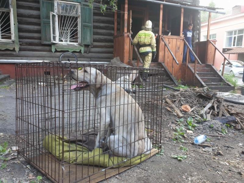 спасенная собака