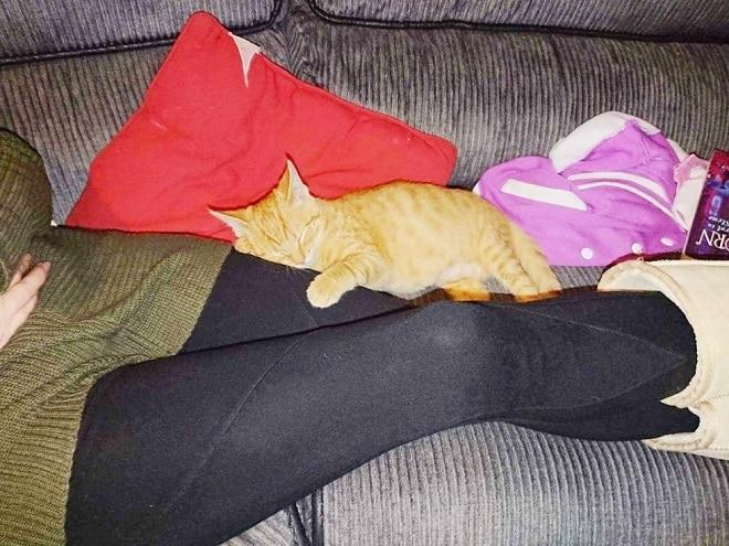 Котенок на ногах