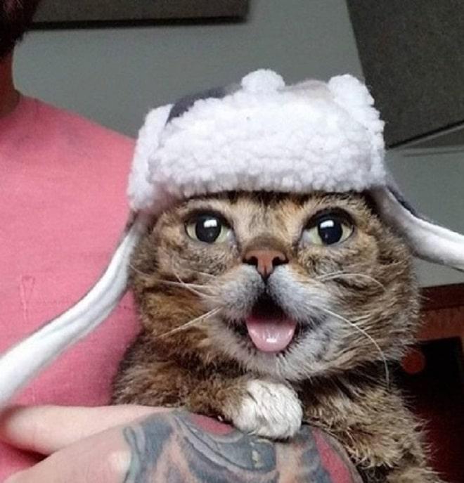 Котейка в шапке-ушанке