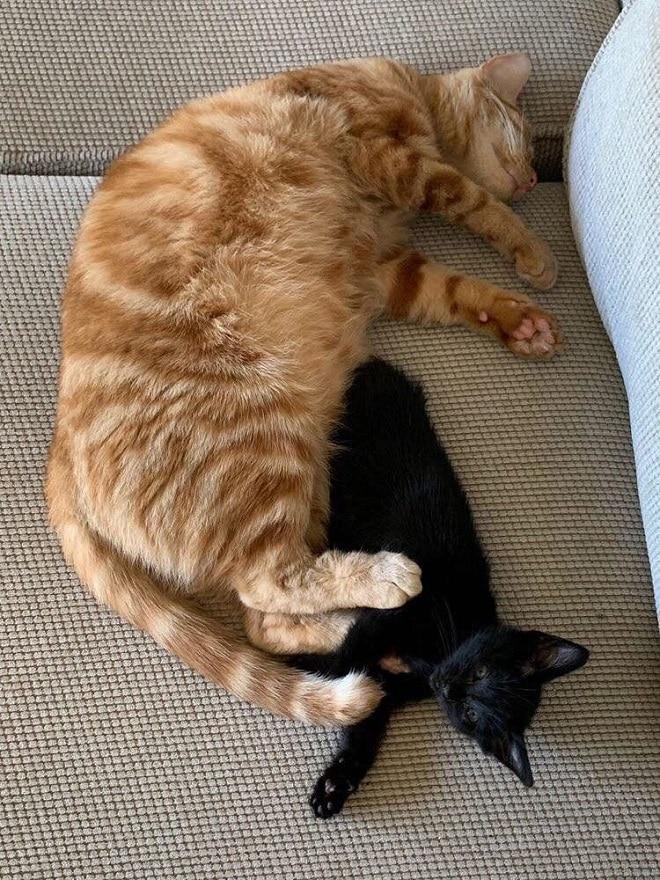 Черный котенок и кот