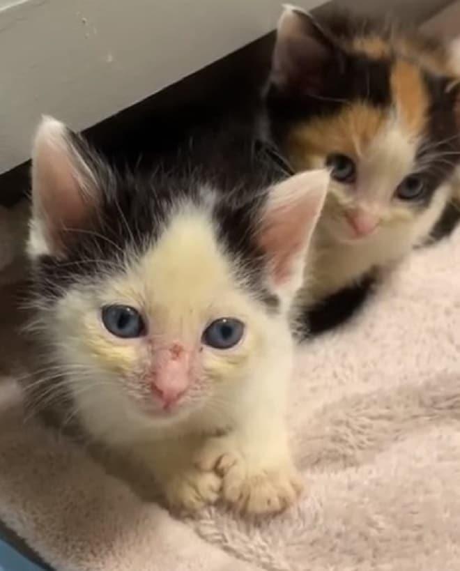 Котята в доме