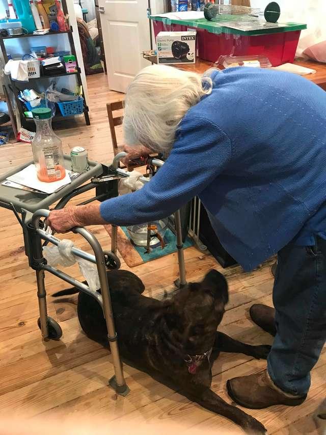 собака с бабушкой