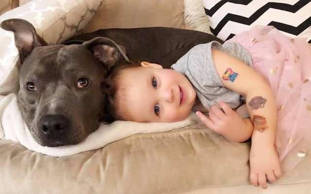питбуль с ребенком