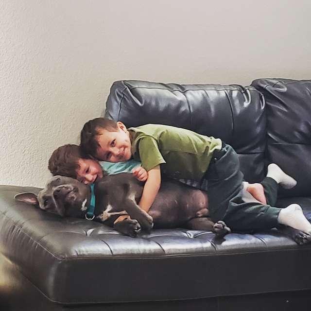 собака с детьми