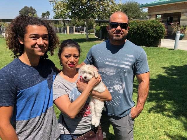 собака с семьей