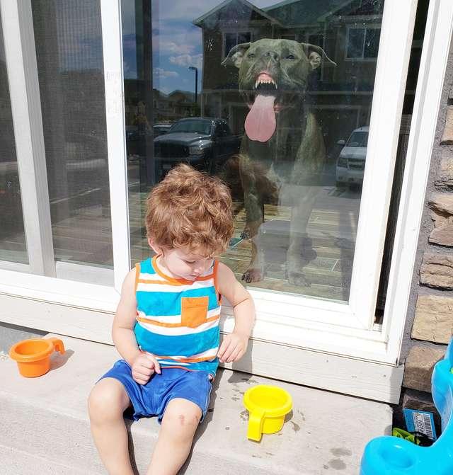 пес лижет окно