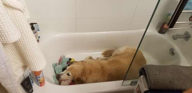 пес в ванной