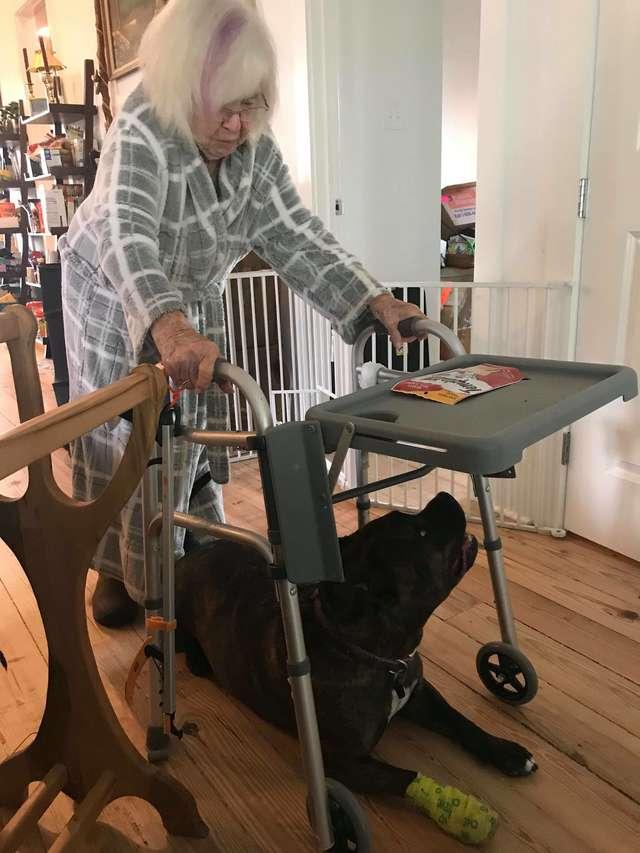 собака с пенсионеркой