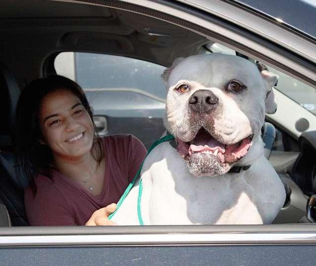 пес и девушка