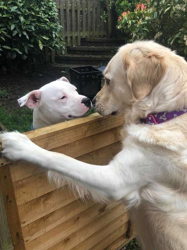 собаки у забора