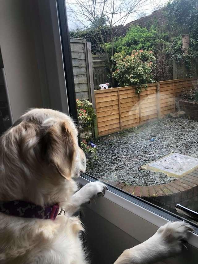 собака у окна
