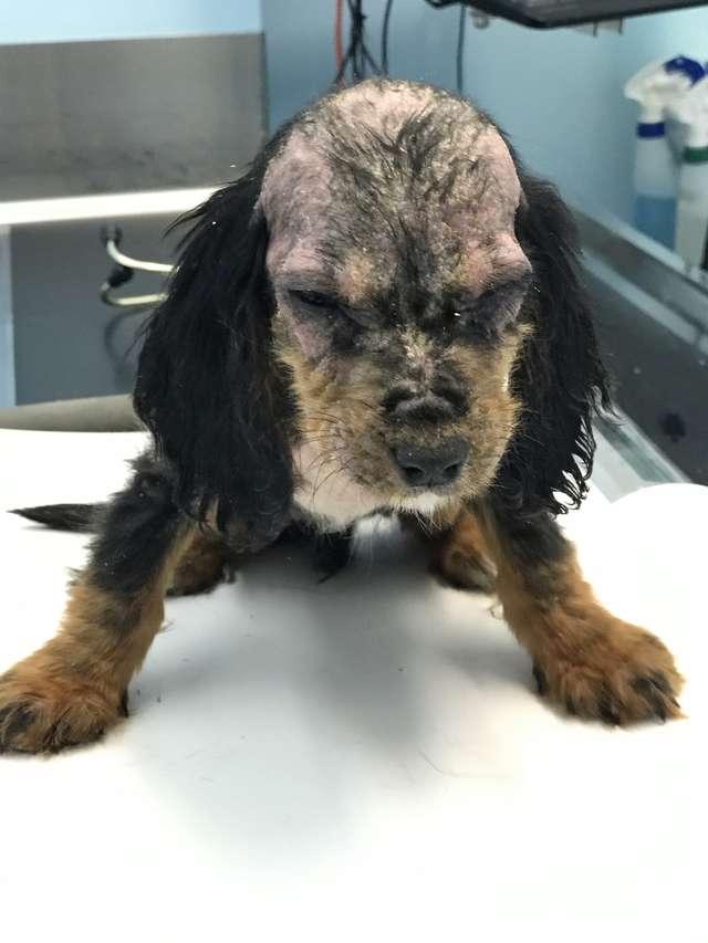 щенок в больнице
