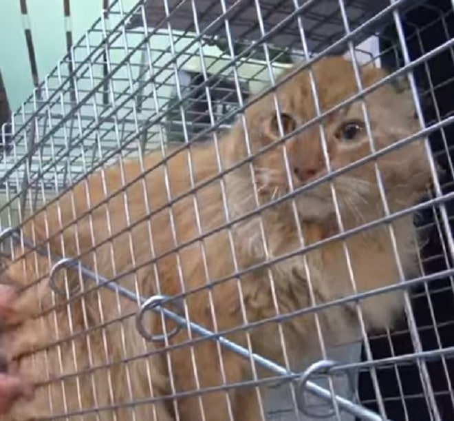 Кот за решеткой