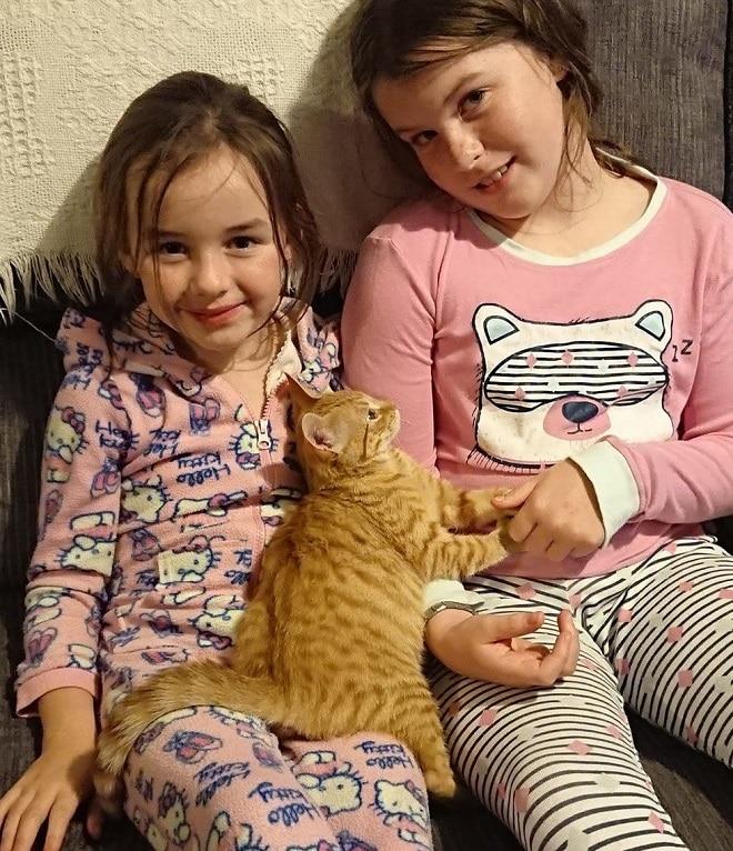 Девочки с котенком