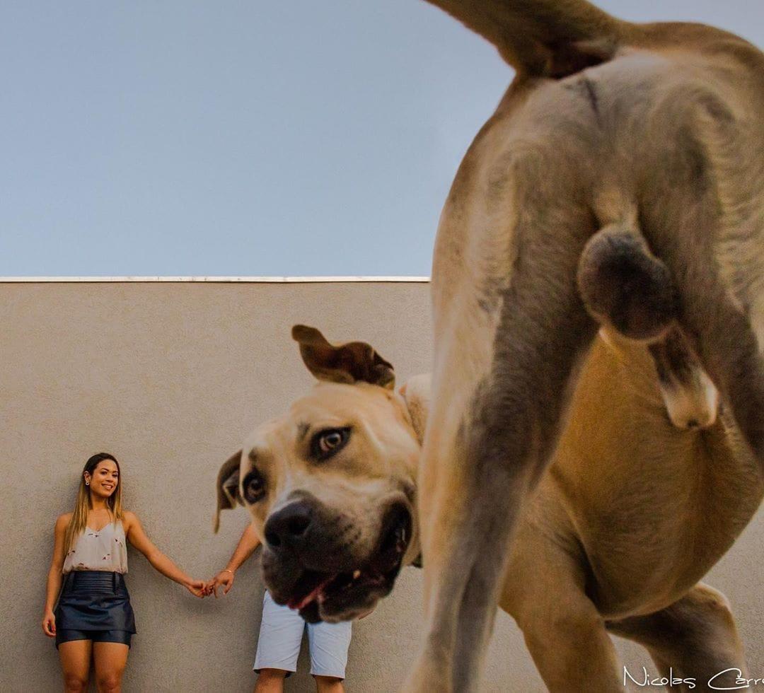 пес с хозяевами