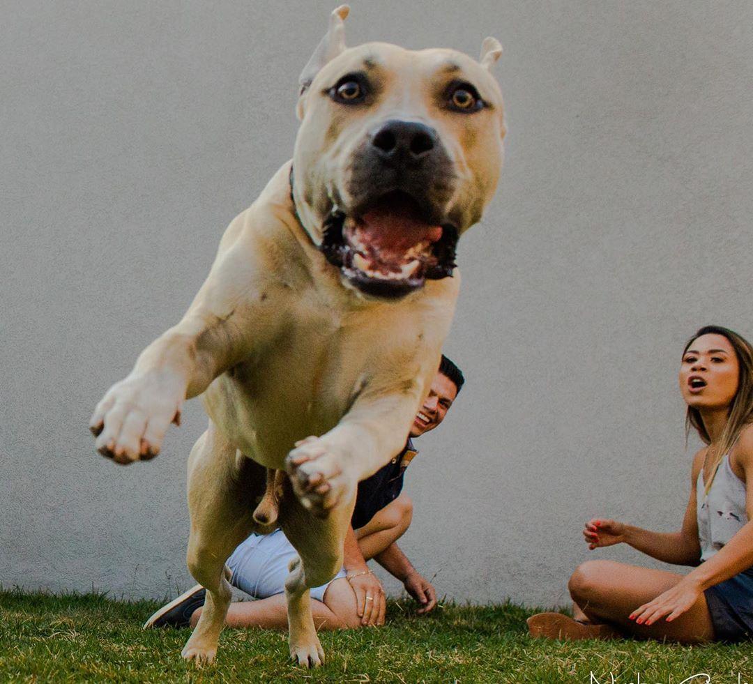 пес играет