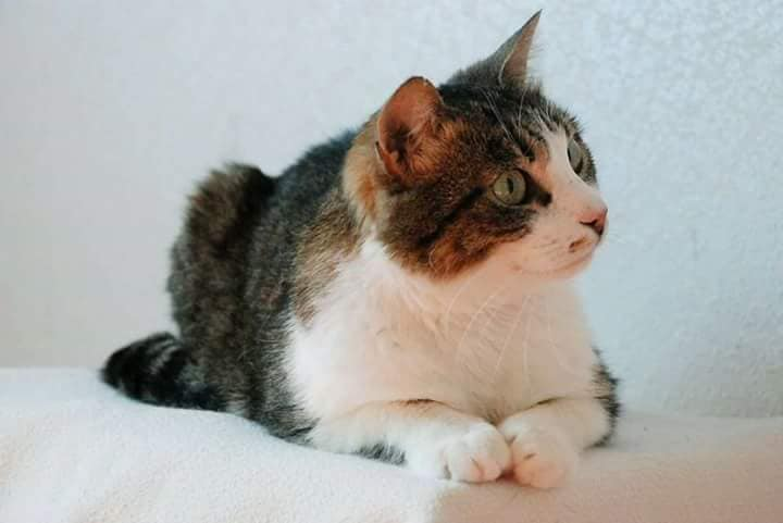 кот на фото