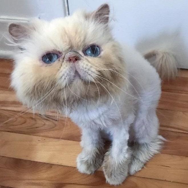 Постриженная кошка