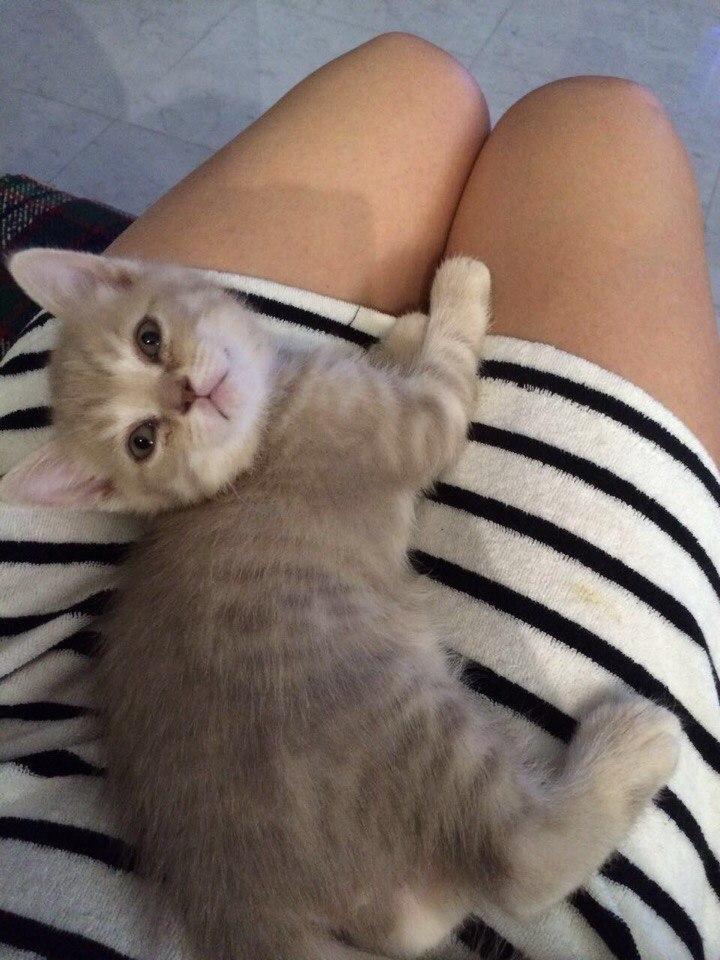 котенок на коленях